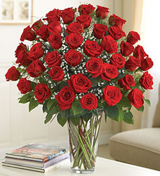 48 Roses - You Choose Color from Clermont Florist & Wine Shop, flower shop in Clermont