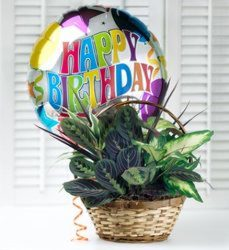 Happy Birthday Planter from Clermont Florist & Wine Shop, flower shop in Clermont