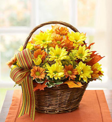 FALL DAISY BASKET ARRANEMENT from Clermont Florist & Wine Shop, flower shop in Clermont