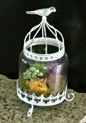 Birdhouse Terrarium from Clermont Florist & Wine Shop, flower shop in Clermont