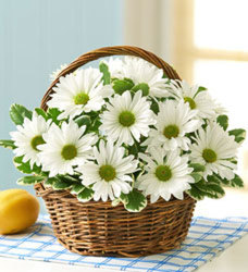 White Daisy Basket from Clermont Florist & Wine Shop, flower shop in Clermont
