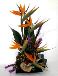 Birds of Paradise from Clermont Florist & Wine Shop, flower shop in Clermont