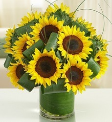 Sun Sational Sunflowers from Clermont Florist & Wine Shop, flower shop in Clermont