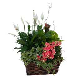 Living Blooming  Garden Basket  from Clermont Florist & Wine Shop, flower shop in Clermont
