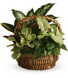 Emerald Garden Basket from Clermont Florist & Wine Shop, flower shop in Clermont
