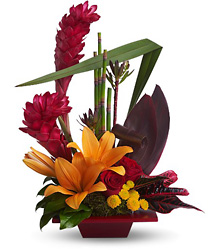 Tropical Bliss from Clermont Florist & Wine Shop, flower shop in Clermont
