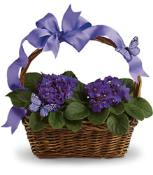 Violets And Butterflies from Clermont Florist & Wine Shop, flower shop in Clermont