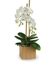 Opulent Orchids from Clermont Florist & Wine Shop, flower shop in Clermont