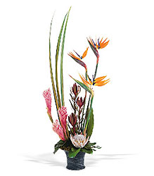 Tropical Paradise Arrangement from Clermont Florist & Wine Shop, flower shop in Clermont
