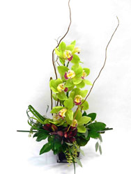 Zenfully Yours! from Clermont Florist & Wine Shop, flower shop in Clermont